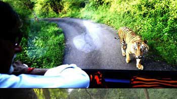 Big B was chased by the Big Cat!