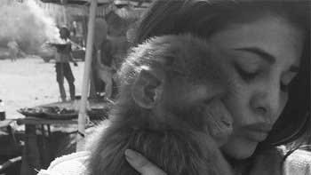 Varun Dhawan and Jacqueline Fernandez adopt a monkey