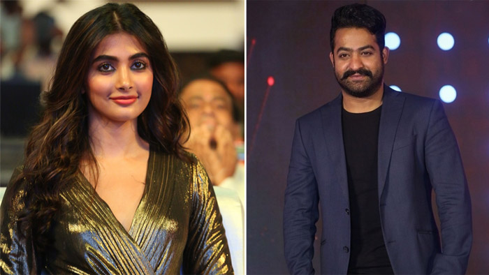 Pooja Hedge to share the screen space with NTR?